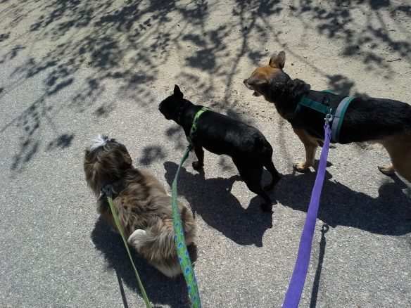Martina and Guapito, teaching dog manners to a young Shih Tzu in Scotts Valley